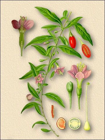 как ягоды годжи влияют на потенцию